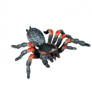 Örümcek Tarantula