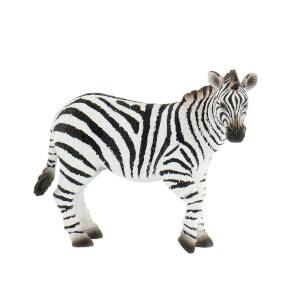 Vahşi Zebra
