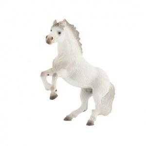 Şaha Kalkmış At