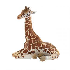 Yavru Zürafa