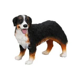 Bernese Köpek