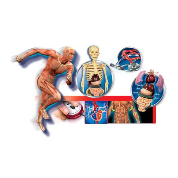Bilim Seti - İnsan Vücudu
