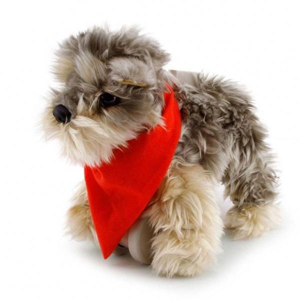My Puppy Yorkie Tanner